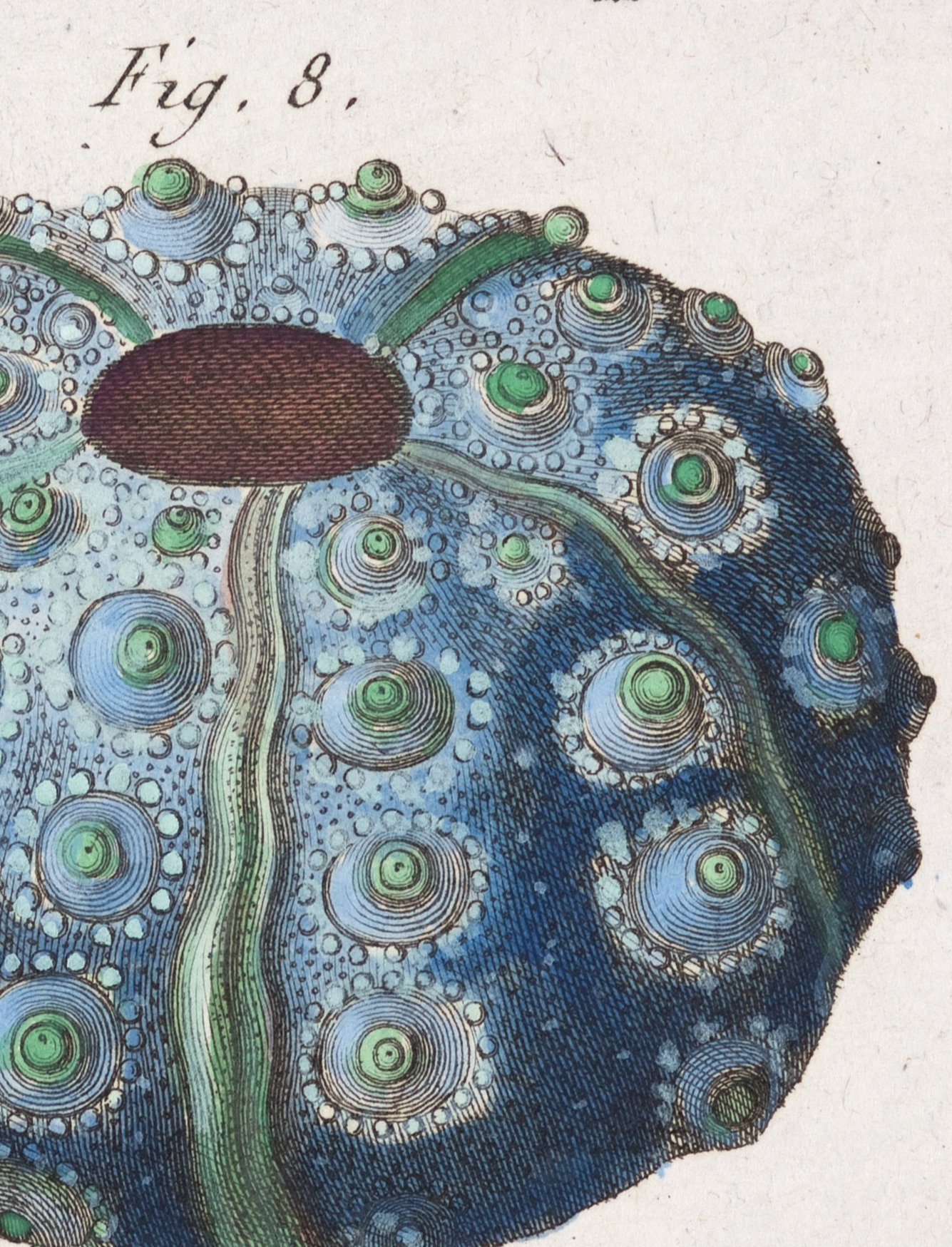 Shapes are an important way of classifying experience as suggested by this French engraving of sea urchins.